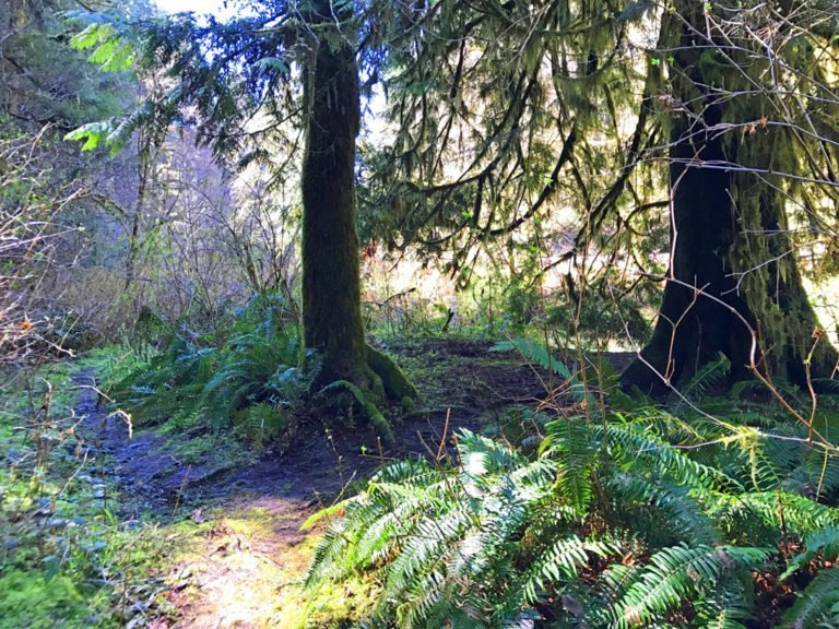 Magical fairytail at the Alderwood Wayside - hiking with kids in Oregon