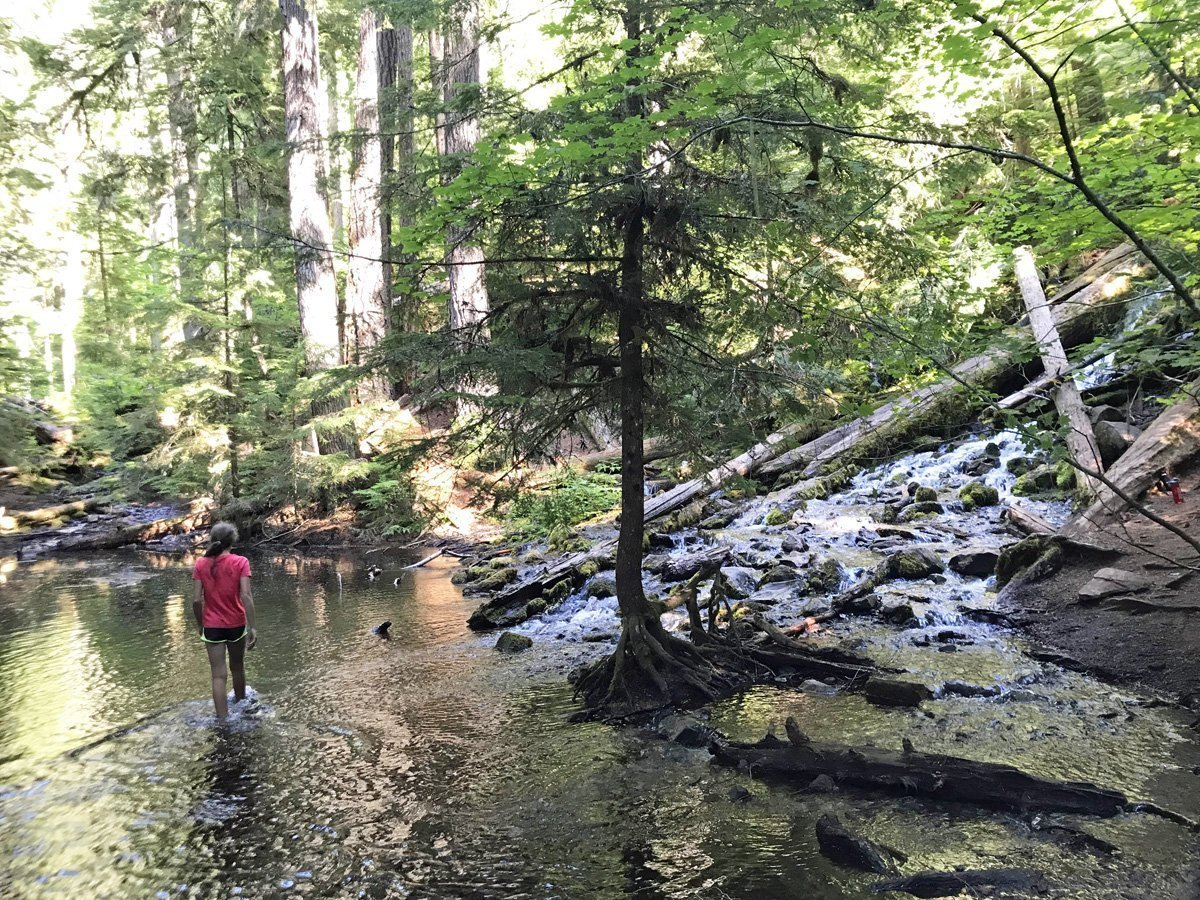 The pool below Upper Proxy Falls is perfect for swimming, except it's icy cold